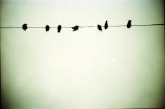 Alfred's Birds