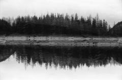 Dark Lake, Deep Woods